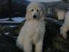 Delilah\'s Boy -- 9 Weeks